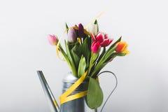 Красочные зацветая тюльпаны в моча баке с желтой лентой на сером цвете Стоковая Фотография RF