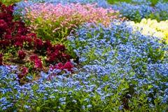 Красочные зацветая цветки в flowerbed Стоковые Изображения RF