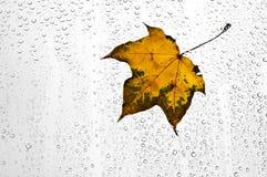 Красочные листья и дождевые капли осени на окне Стоковое Изображение