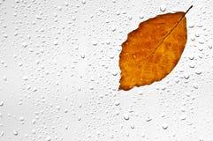 Красочные листья и дождевые капли осени на окне Стоковая Фотография