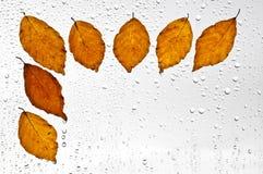 Красочные листья и дождевые капли осени на окне Стоковое фото RF