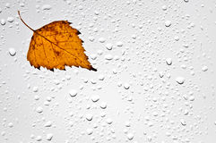 Красочные листья и дождевые капли осени на окне Стоковое Фото