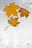 Красочные листья и дождевые капли осени на окне Стоковые Фото