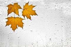 Красочные листья и дождевые капли осени на окне Стоковые Изображения
