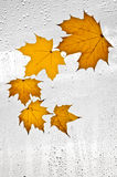 Красочные листья и дождевые капли осени на окне Стоковое Изображение RF