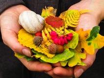 Красочные листья и ягоды Стоковое фото RF