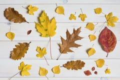 Красочные листья на белой деревянной предпосылке графической sy положенное квартирой Стоковое фото RF