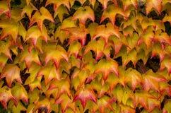 Красочные листья на доме Стоковые Фотографии RF