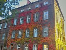Красочные листья на стенах Wawel рокируют Стоковые Фотографии RF