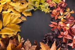 Красочные листья на черной предпосылке Стоковая Фотография RF