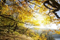 Красочные листья осени на ветвях дерева стоковые изображения