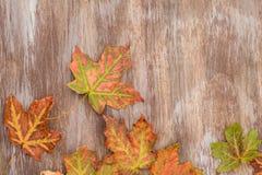 Красочные листья осени на деревянной предпосылке стоковая фотография