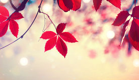 Красочные листья осени над запачканной предпосылкой природы стоковые изображения