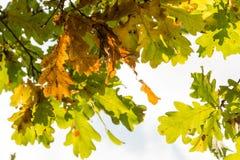 Красочные листья осени на заходе солнца Стоковое Изображение RF