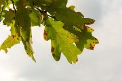 Красочные листья осени на заходе солнца Стоковые Фотографии RF