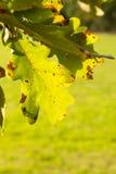 Красочные листья осени на заходе солнца Стоковые Изображения