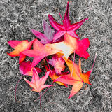 Красочные листья осени на земле на парке Стоковое Фото