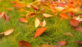 Красочные листья осени на зеленой траве & x28; lawn& x29; стоковое изображение rf