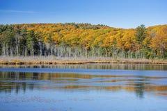 Красочные листья осени отраженные в пруде мочат, Норфолк, соединяются Стоковое Изображение