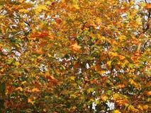 Красочные листья осени Стоковые Изображения