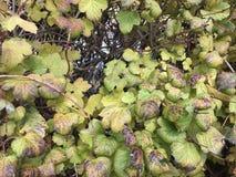 красочные листья падения изменяя цвет стоковые фотографии rf
