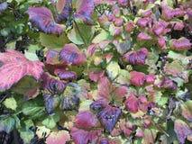 красочные листья падения изменяя цвет стоковая фотография