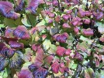 красочные листья падения изменяя цвет стоковые изображения rf