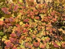 красочные листья падения изменяя цвет стоковое фото rf