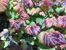 красочные листья падения изменяя цвет стоковые фото