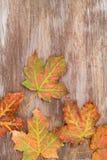 Красочные листья падения на деревянной предпосылке стоковое фото