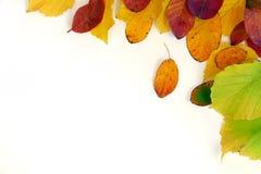 Красочные листья покрашенные к осень, угол предпосылки, изолировали o Стоковая Фотография RF