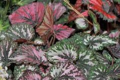 Красочные листья Стоковые Изображения RF