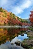 Красочные лист и река осени с голубым небом Стоковые Изображения RF