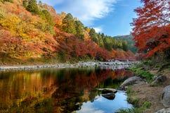 Красочные лист и река осени с голубым небом Стоковая Фотография