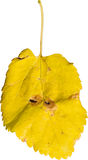 Красочные лист Стоковые Изображения RF