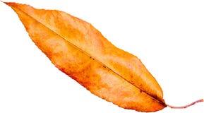 Красочные лист Стоковые Изображения
