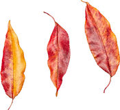 Красочные лист Стоковая Фотография
