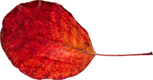 Красочные лист Стоковое Изображение RF