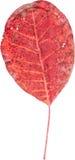 Красочные лист Стоковое Фото