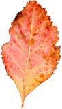 Красочные лист Стоковые Фотографии RF
