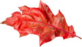 Красочные лист Стоковая Фотография RF