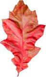 Красочные лист Стоковые Фото