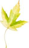 Красочные лист Стоковое Изображение