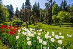 Красочные и variegated тюльпаны цветут в ботаническом саде виллы Таранта в Pallanza, Verbania, Италии Стоковое Изображение RF