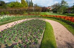 Красочные и variegated тюльпаны цветут в ботаническом саде виллы Таранта в Pallanza, Verbania, Италии Стоковое фото RF