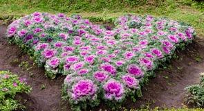 Красочные капусты представляют сердце стоковая фотография