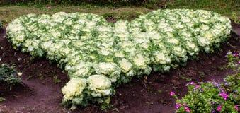Красочные капусты представляют сердце стоковое изображение rf