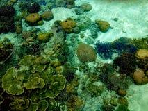 Красочные коралловый риф и остров Lankayan морской флоры и фауны, Борнео стоковое фото