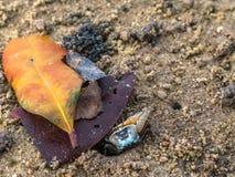 красочные крабы живя на пляже Стоковые Фотографии RF
