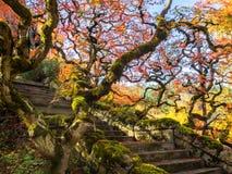 Красочные кленовые листы вдоль лестничных маршей Стоковые Фото
